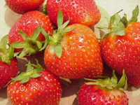 Grocery News: Berry Picking