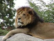 Lionchristopher