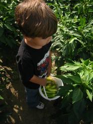 Community Farm on Kid o Info