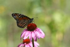 Monarch Earth Day Kbs-1