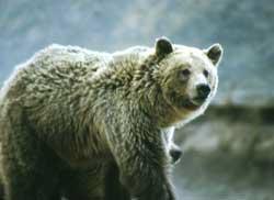 Profile-Bear1-Recylcine in Kid o Info
