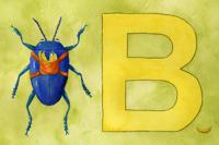 B-Beetle-at Madre Bella  on kid o info