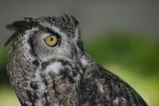 owl on kid o info