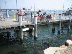 Feeding the Fish at Abbotts