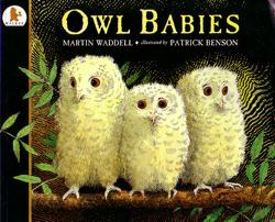 Owl-Babies1