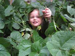 picking vegetables o n kid o info