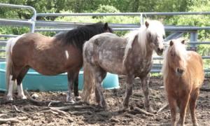 farm-horses
