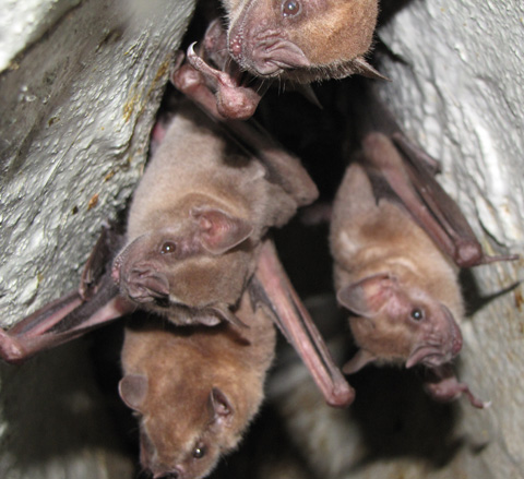 October-Article---Bats