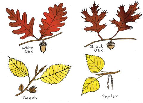 _oakcolor