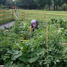 Waste Not: Donate your excess garden vegetables to local food shelter