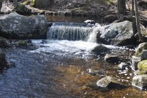 Family Hiking: Arcadia Management Area