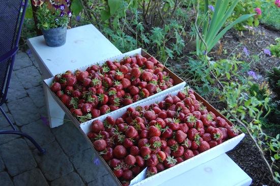 traysofberries