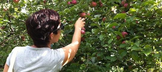 Edible Rhody KIDS: APPLES (Fall 2014)