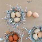 bird_nest8