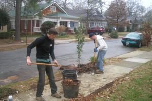 Free Trees for Rhode Islanders