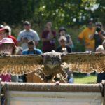 Soaring in September: Audubon Raptor Weekend 2016