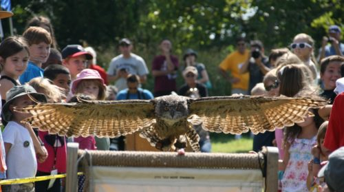 European Eagle Owl Spreads its Wings by Hope Foley (Taken at Raptor Weekend 2015)