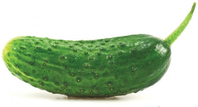 Edible Rhody KIDS (Fall 2016): Pickle This!