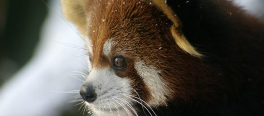 Roger Williams Park Zoo is open free on Black Friday!