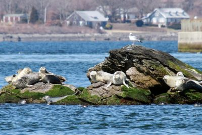 Westerly Nature Cruise & Seal Tour with Save The Bay @ Viking Marina