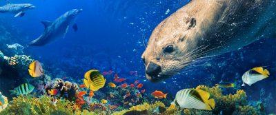 Giant Ocean Tank Divers/Talk @ New England Aquarium