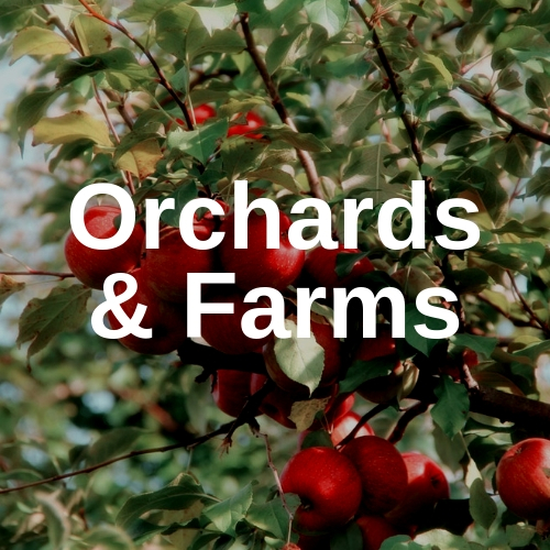 orchards and farms